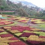 Visita ao Jardim Botânico da Madeira